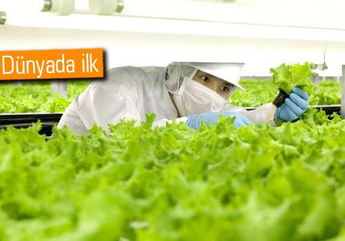 Japonlardan tarımda devrim gibi buluş