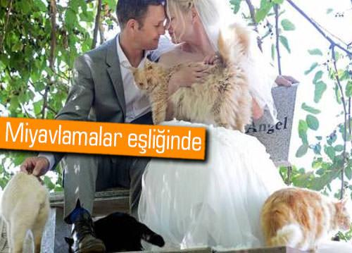 Bu nikaha sadece kediler davet edildi
