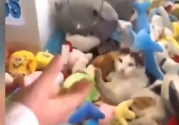 Oyuncak yakalama makinesine kedi girerse ne olur?
